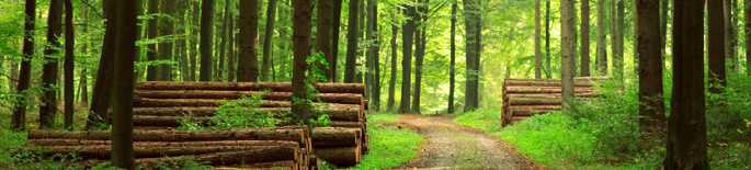 Forestry Management Systems