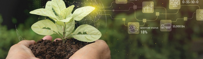 Soil and plant in hands