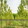 Forêt jeune